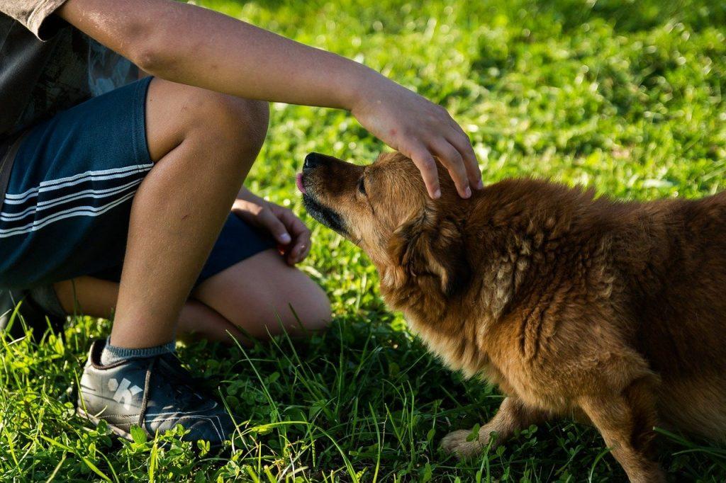 enfant qui carresse un chien